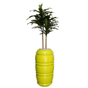 Dracaena Fat Leaf in Ribbed Karla Urn