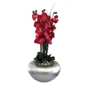 Orchid Arrangement in Pimple Vase