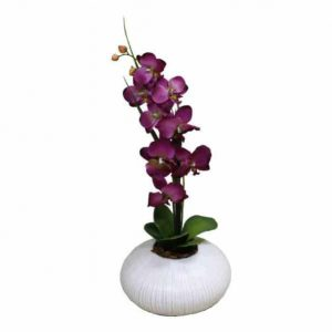 Purple Orchid in Urchin Vase