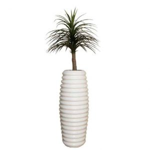 Thin Leaf Dracaena in Tall Karla Urn