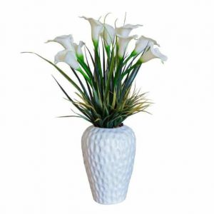 White Arum Lilly in Dimple Vase