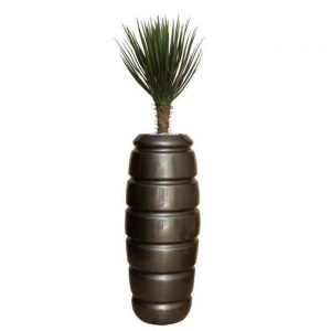 Yucca Base Bush in Tall Venus Pot